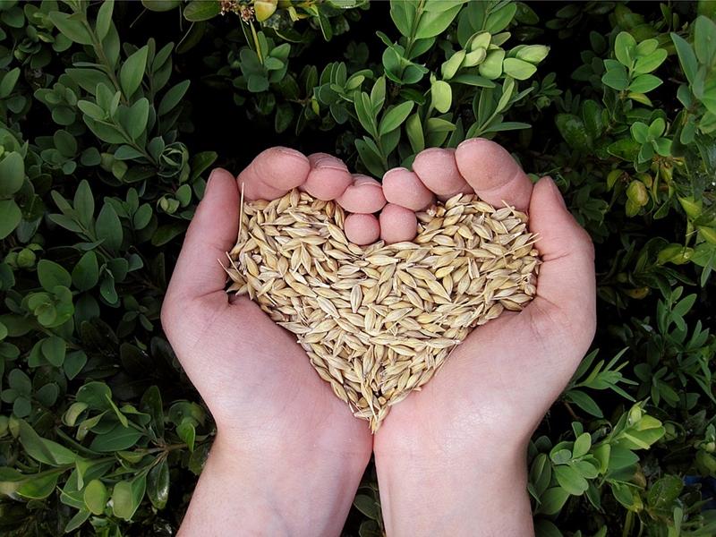 cerealinonsonotuttiugualiweb
