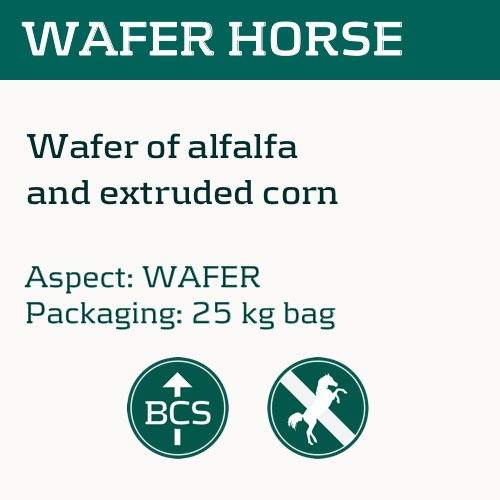 wafer-horse_eng