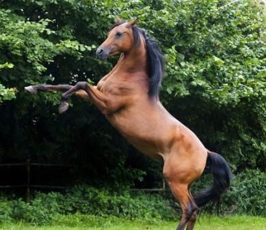 la-paura-nel-cavallo