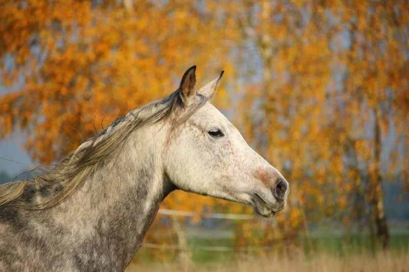 horse-1012517_960_720