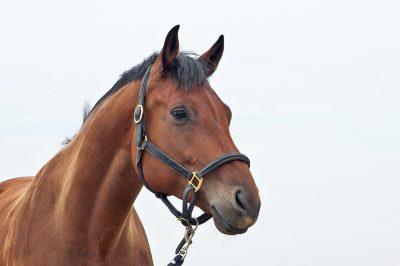 horses-1040953_960_720