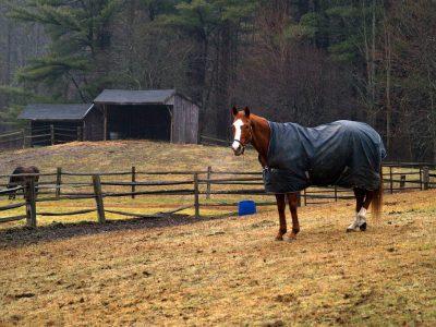 horse-582472_960_720