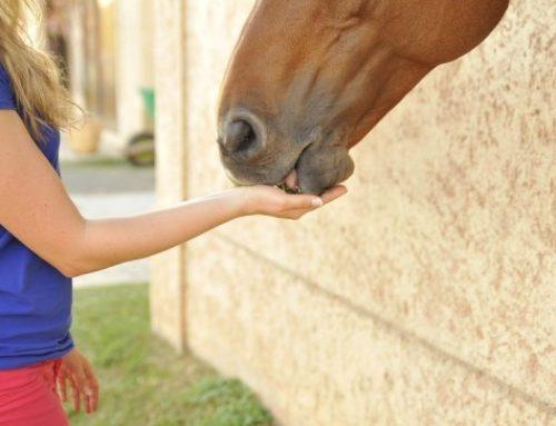 Come apprende al meglio un cavallo?
