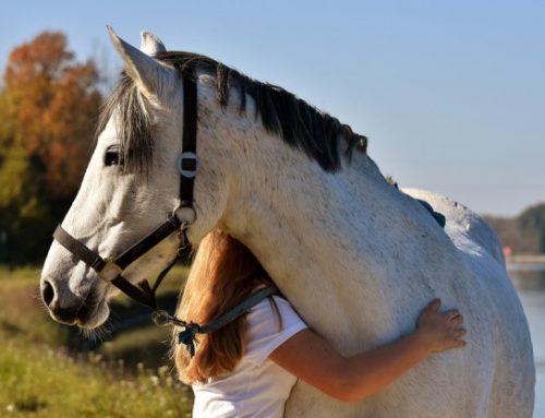 Il cavallo: conduttore privilegiato nella Pet Therapy