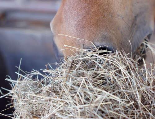 Quali sono le fonti di energia per i cavalli?