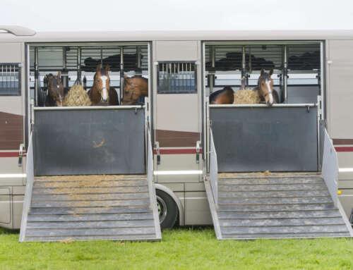 Come gestire l'alimentazione del cavallo in trasferta?